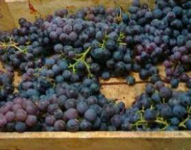Брага з виноградного, яблучного макухи фото