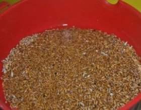 Брага на зерновій осноⳠфото