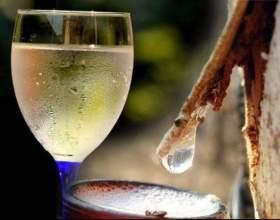 Робимо вино з березового соку в домашніх умовах фото