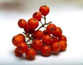Домашні настоянки з ягід горобини червоною фото