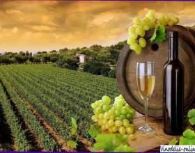 Історія виноробства у франції фото