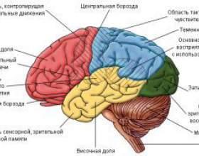 Як алкоголь впливає на мозок? фото