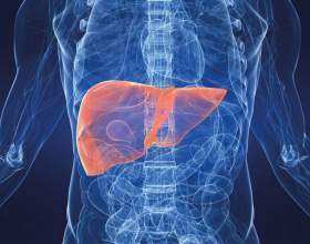 Як алкоголь впливає на печінку? фото