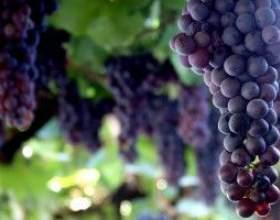 Як поставити вино в домашніх умовах фото