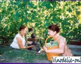 Як підвищити врожайність винограду фото
