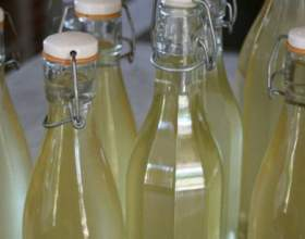 Як зробити вино з агрусу фото