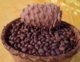 Кедрівка - настоянка на кедрових горішках фото