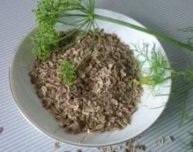 Настій насіння кропу фото