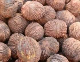 Настоянка чорного горіха - цілющий ліки від природи фото