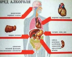 Негативний вплив алкоголю на організм людини фото