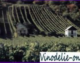 Особливості угорського вина фото