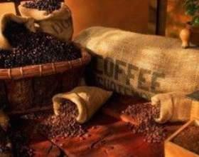 Популярний сорт кави - арабіка фото