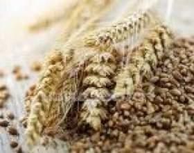 Пшенична брага без дріжджів фото