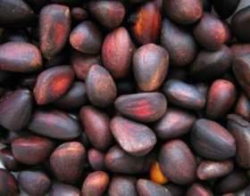 Рецепт кедрової настоянки на самогоні. Настоянка з кедрових горішків фото