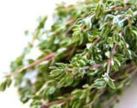 Рецепт приготування трави чебрець від алкоголізму фото