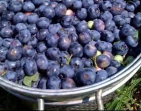 Рецепт вина з лохини в домашніх умовах фото