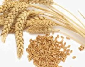 """Самогон з пшениці робимо самі С""""РѕС'Рѕ"""