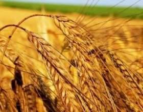 Самогон з пшениці фото