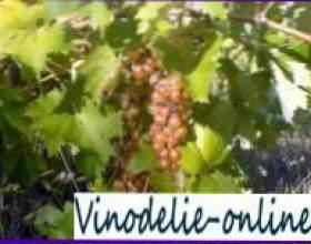 Будова виноградної лози фото