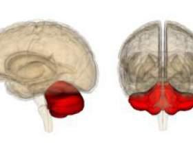 Вчені знайшли відмінності між непитущими і алкоголіками фото