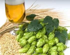 Дізнайтеся рецепт пива з хмелю фото