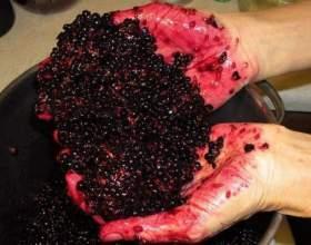 У городі бузина, а в погребі вінчик. Готуємо бузинового вино! фото