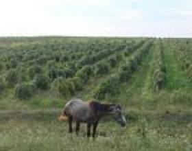 Виноробство болгарії - ч. 2 - ч. 2 фото
