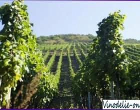 Виноробство в германии фото