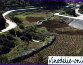 Виноробство в хорватії фото