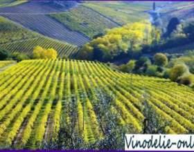 Виноробство в італії фото