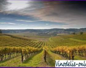 Виноробство у франції фото