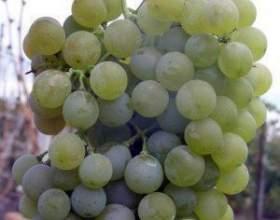 Виноград квітковий фото