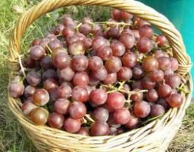 Смачна виноградна наливка на горілці фото