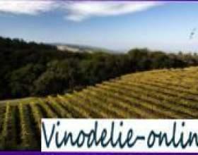 Закладка виноградника фото