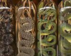 Зміївка (вино або горілка зі змією) - екзотичне спиртне сходу фото