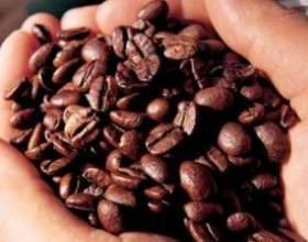 Знайомтеся - кава робуста фото